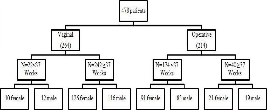 Figure 1: Patients characteristics. Data presented as numbers.